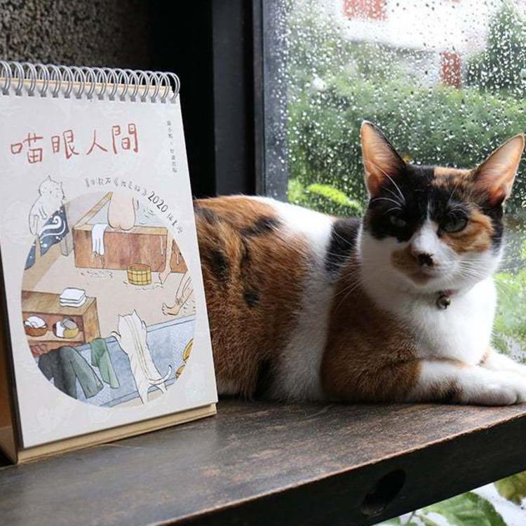 夏目潄石《我是貓》主角現身「貓村藝術季」推2020「喵眼人間」桌曆